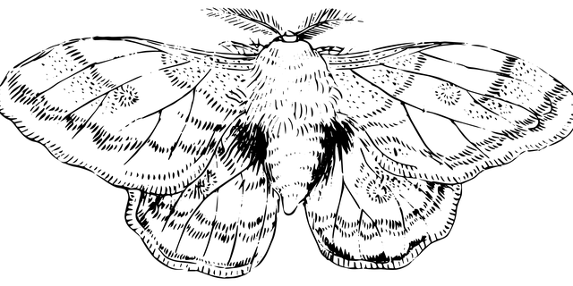 zvětšený mol
