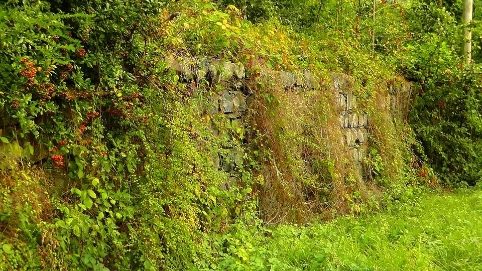 prorostlá zeď