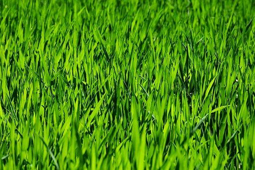 zelený_trávník